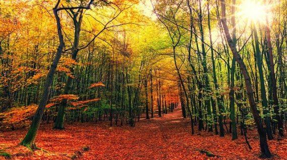 otoño3